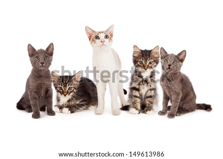 Five young little kittens standing together against a white background and looking at the camera. #149613986