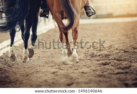 Dust under the hooves of a horses. Legs of two sports horses galloping around the arena. #1496140646