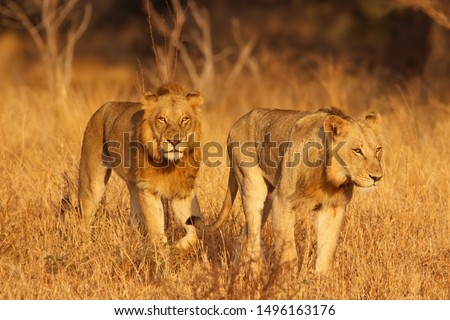 Wildlife and animals from the Kruger National Park  #1496163176