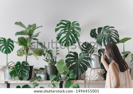 woman is taking care of houseplants. urban jungle interior. watering and spraing with water. Royalty-Free Stock Photo #1496455001