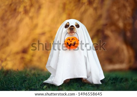 dog in a ghost costume holding a pumpkin in mouth #1496558645