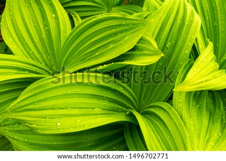 A plant with several leaves with beautiful bright curves. #1496702771