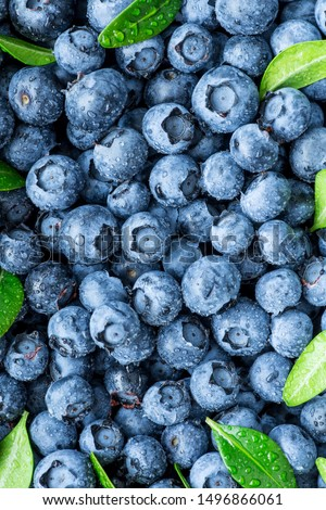 Water drops on ripe sweet blueberry. Fresh blueberries background with copy space for your text. Vegan and vegetarian concept. Macro texture of blueberry berries.Texture blueberry berries close up #1496866061