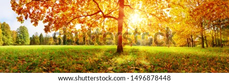 trees in the park in autumn on sunny day #1496878448