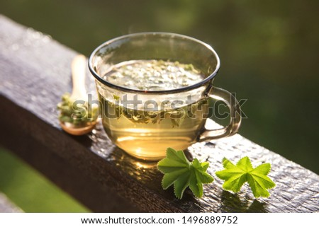 Alchemilla vulgaris, common lady's mantle medicinal herbal tea concept. Composition on natural wooden board with beautiful back light from sunny day in summer. #1496889752