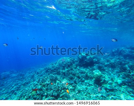 Sea underwater and coral reef. #1496916065