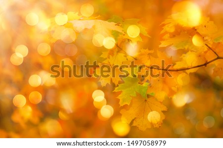 Autumn orange leaves over blurred sky, autumn nature background with bokeh #1497058979