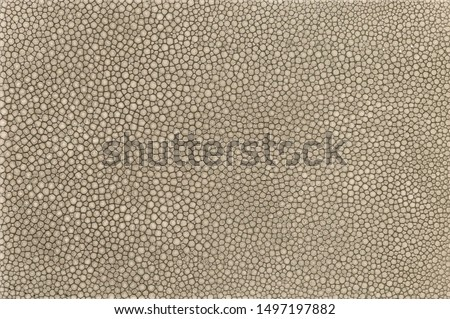 Real stingray fish skin texture