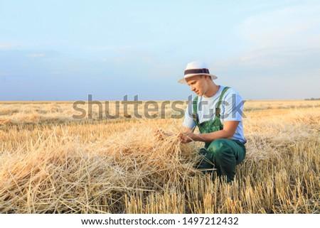 Male farmer working in wheat field #1497212432