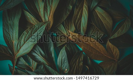 foliage on a blue background, place for text #1497416729