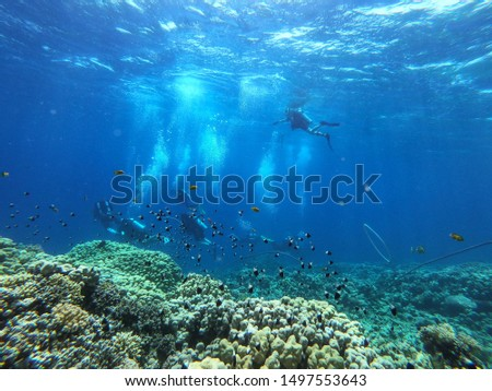 Diving photo and underwater ocean background. Free space for your decoration.  #1497553643