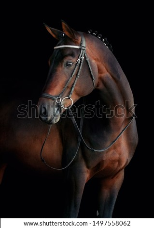 Beautiful portrait of a horse on black background