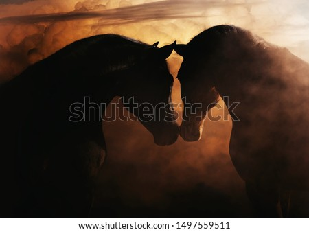 Beautiful portrait of two horses