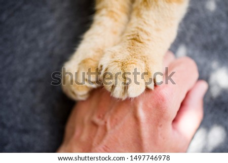 Cat red paws and a human hand closeup, top view. Conceptual image of friendship, trust, love, help between man and cat #1497746978
