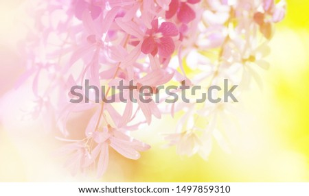 Soft flowers in soft style. Beautiful Flowers on soft sparkle in soft focus with filter colors use for Love and Valentine's Day, wedding and love Concept background. #1497859310