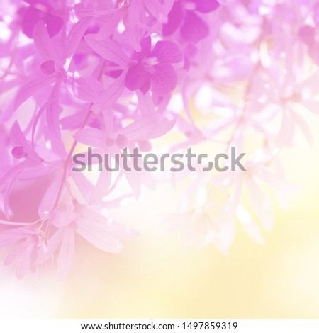 Soft flowers in soft style. Beautiful Flowers on soft sparkle in soft focus with filter colors use for Love and Valentine's Day, wedding and love Concept background. #1497859319