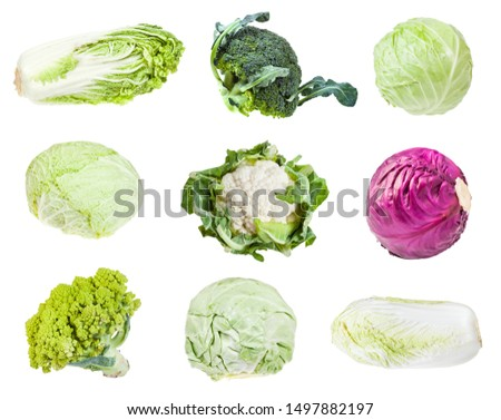 various headed cabbages (romanesco, broccoli, cauliflower, white cabbage, red cabbage, napa cabbage, savoy cabbage) isolated on white background #1497882197