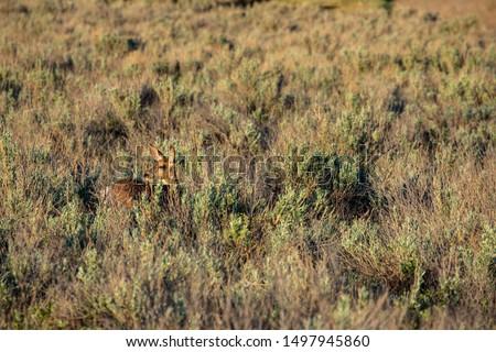 Roe Deer in the wilderness of Alberta in the wilderness of Alberta #1497945860