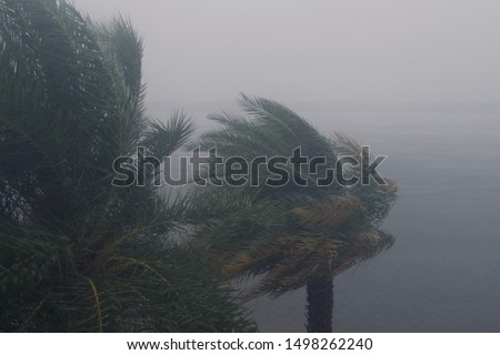 HURRICANE DORIAN:  South Florida, September 2, 2019 - Trees during storm, wind and rain - Tropical Storm from HURRICANE DORIAN #1498262240