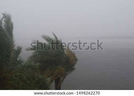 HURRICANE DORIAN:  South Florida, September 2, 2019 - Trees during storm, wind and rain - Tropical Storm from HURRICANE DORIAN #1498262270