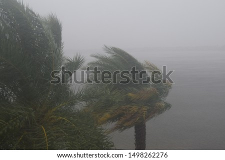 HURRICANE DORIAN:  South Florida, September 2, 2019 - Trees during storm, wind and rain - Tropical Storm from HURRICANE DORIAN #1498262276