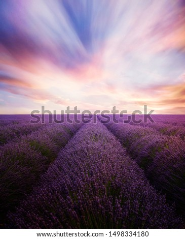 Lavender field with dramatic sunset #1498334180