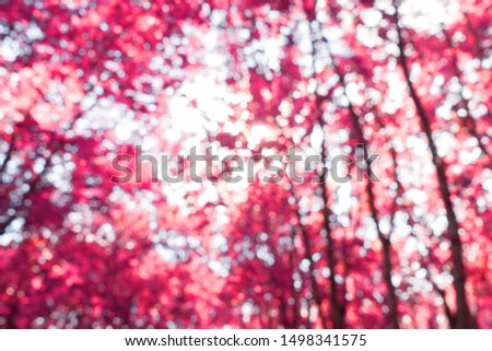 Low angle view of purple fantasy autumn trees in forest landscape with infrared effect. Abstract infrared photography
