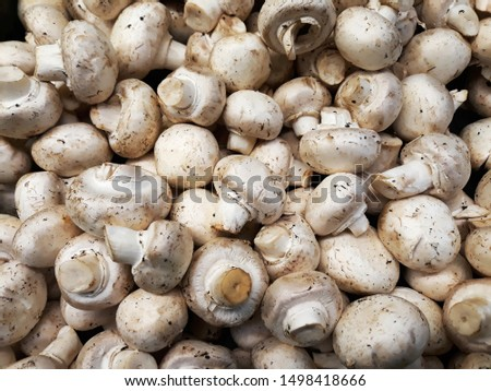 Handful of raw common mushrooms top view, button mushroom picture, cultivated mushroom photography, table mushroom