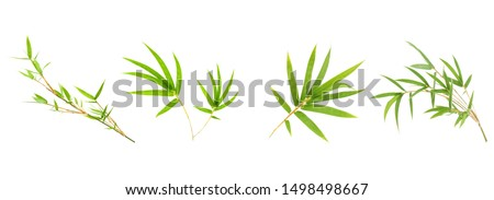 Bamboo leaf isolated on white background, Fresh bamboo leaves texture as background or wallpaper, Chinese bamboo leaf, Collection or set of green bamboo leaves #1498498667