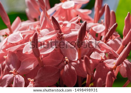 close up of pink flowers  #1498498931