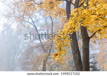 park trees with bright yellow foliage against cloudy sky background during foggy weather #1498517102