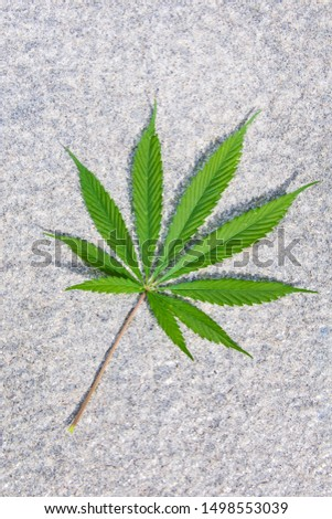 Cannabis leaves on white rock background. #1498553039
