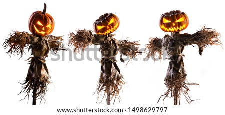 halloween pumpkin scarecrow isolated on white background.