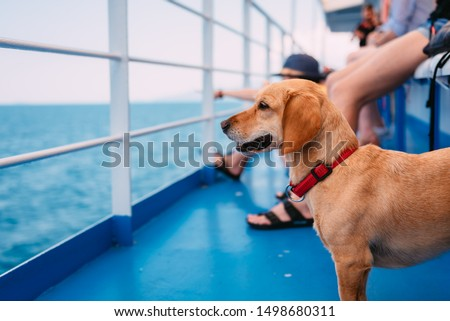 Small brown dog traveling on the ferry with his owners and panting while looking at the sea Royalty-Free Stock Photo #1498680311