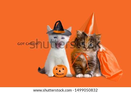 holiday halloween pumpkin kittens lantern