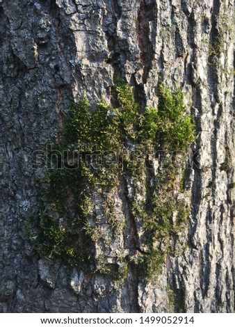 Moss on the bark of a tree close-up. #1499052914