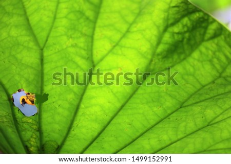 The lotus leaf that is eaten by an insect is vulnerable,Blurred background,bird on lotus leave,amazing pic.