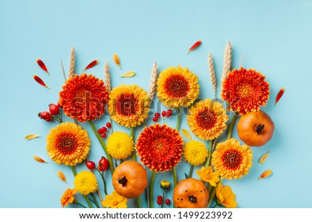 Creative autumn nature composition with orange and yellow gerbera flowers, decorative pumpkins, wheat ears on blue background. Thanksgiving day concept. Flat lay.