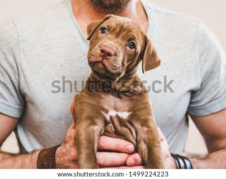 Attractive man hugging a young, pretty puppy. Close-up, white isolated background. Studio photo. Concept of care, education, obedience training, raising of pets Royalty-Free Stock Photo #1499224223