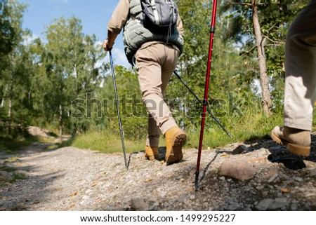 Back view of active man with trekking sticks moving down forest road with pines and blue sky on background #1499295227