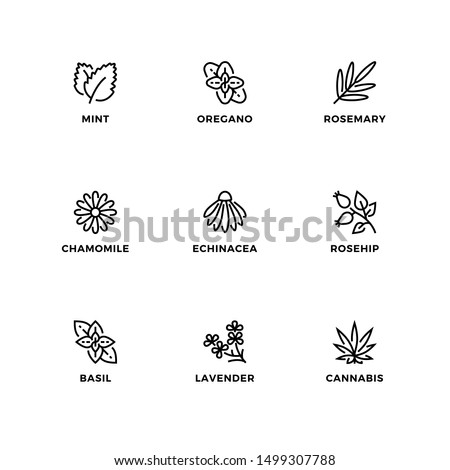 Vector set of design elements, logo design template, icons and badges for nature herbs. Line icon set, editable stroke.  Royalty-Free Stock Photo #1499307788