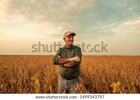 Senior farmer standing in soybean field examining crop at sunset. Royalty-Free Stock Photo #1499343797