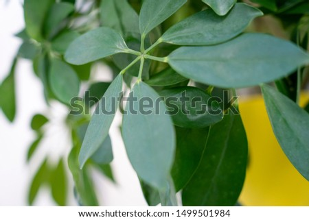 Green Plant and Leafs in Office #1499501984