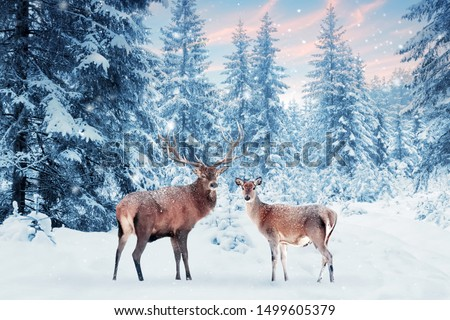 Family of noble deer in a snowy winter forest at sunset. Christmas fantasy image in blue and white color. Pink clouds. Snowing. Winter wonderland. #1499605379