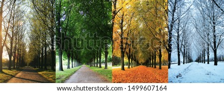 The four seasons of the herrenhausen garden alley in hanover / Germany - spring, summer, autumn, winter Royalty-Free Stock Photo #1499607164