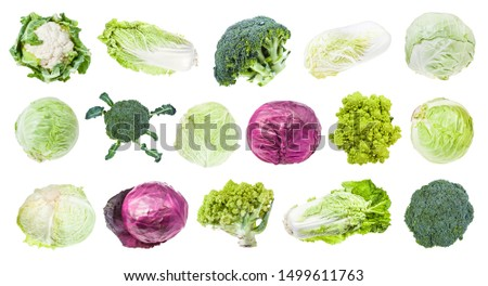 many various headed cabbages (romanesco, broccoli, cauliflower, white cabbage, red cabbage, napa cabbage, savoy cabbage, etc) isolated on white background #1499611763