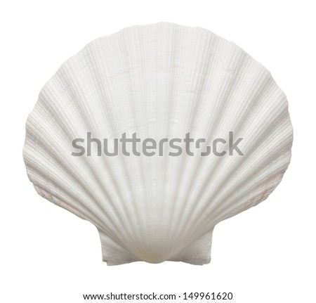 Close up of ocean shell isolated on white background Royalty-Free Stock Photo #149961620