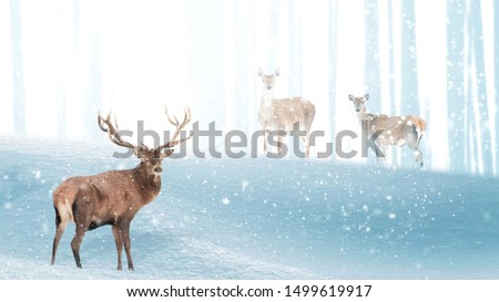 Red deer in a winter magic forest. Christmas fantastic image. Free space for text. Winter wonderland.