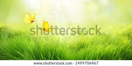 Natural green background of young juicy grass in sunlight with beautiful bokeh. Lush grass macro and two flying butterflies in nature outdoors, wide format with copy space. #1499706467