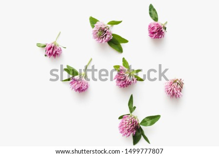 field clover, clover flowers, clover flowers on a white background, medicinal flowers #1499777807
